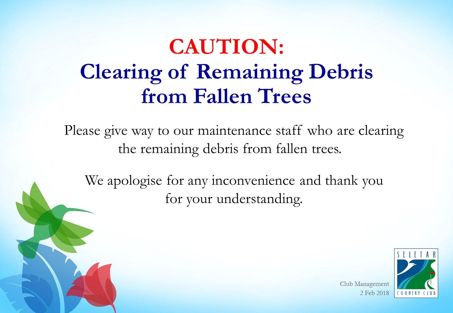 Clearing of Remaining Debris from Fallen Trees